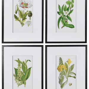 Set 4 Flower Pictures 70 x 50cm €185